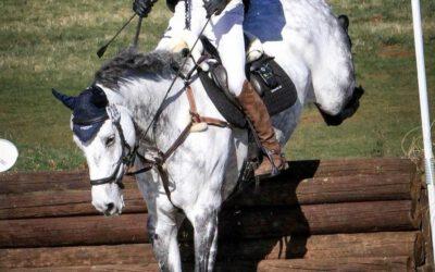 Championship horse